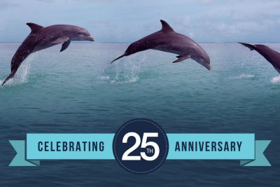 dolphins jumping out of the water over a banner reading Celebrating 25th anniversary